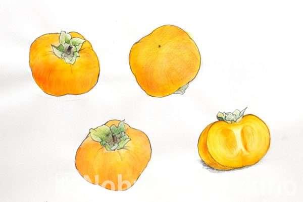 柿(素描)