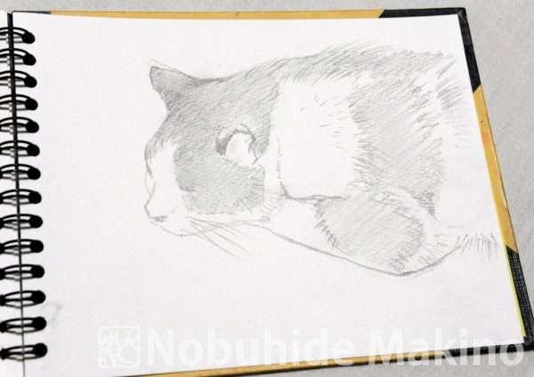 猫(素描)